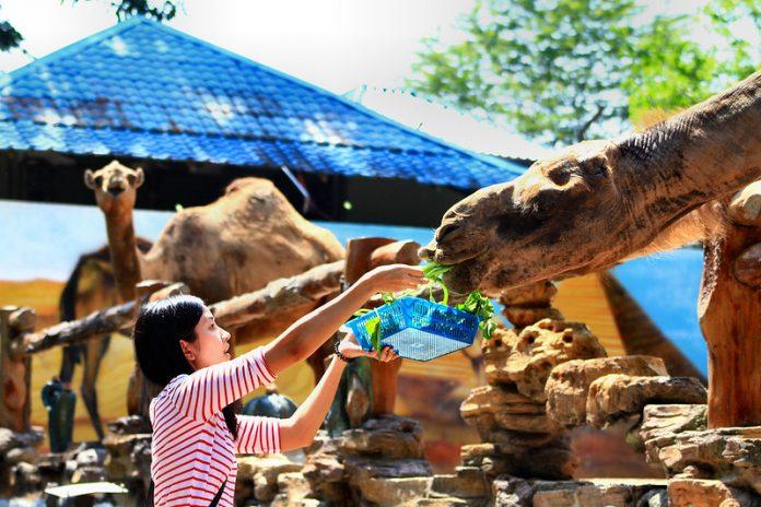Johor Bahru Bus to Zoo